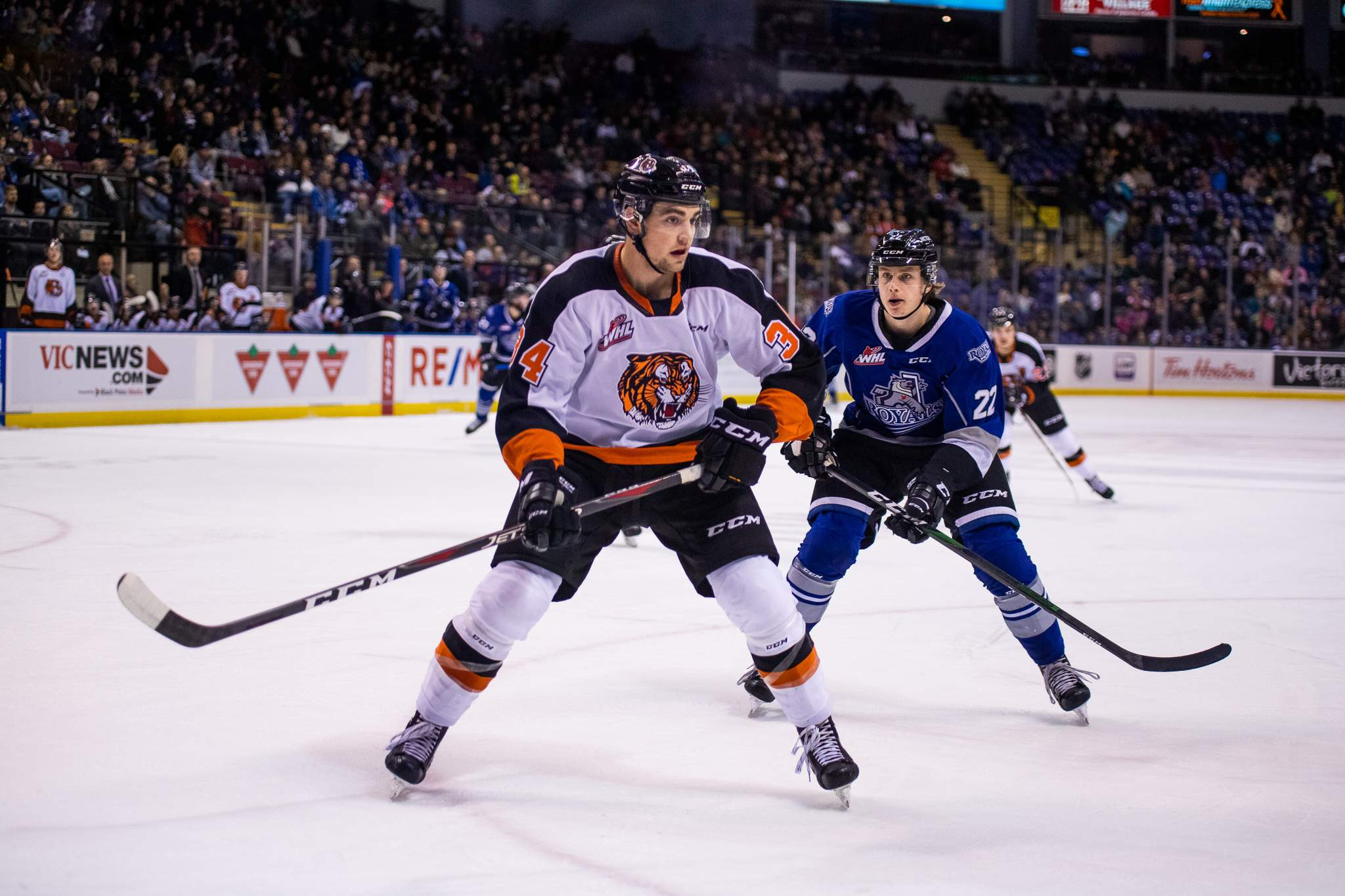 Victoria Royals vs Medicine Hat Tigers. Photo by Nathanael Laranjeiras