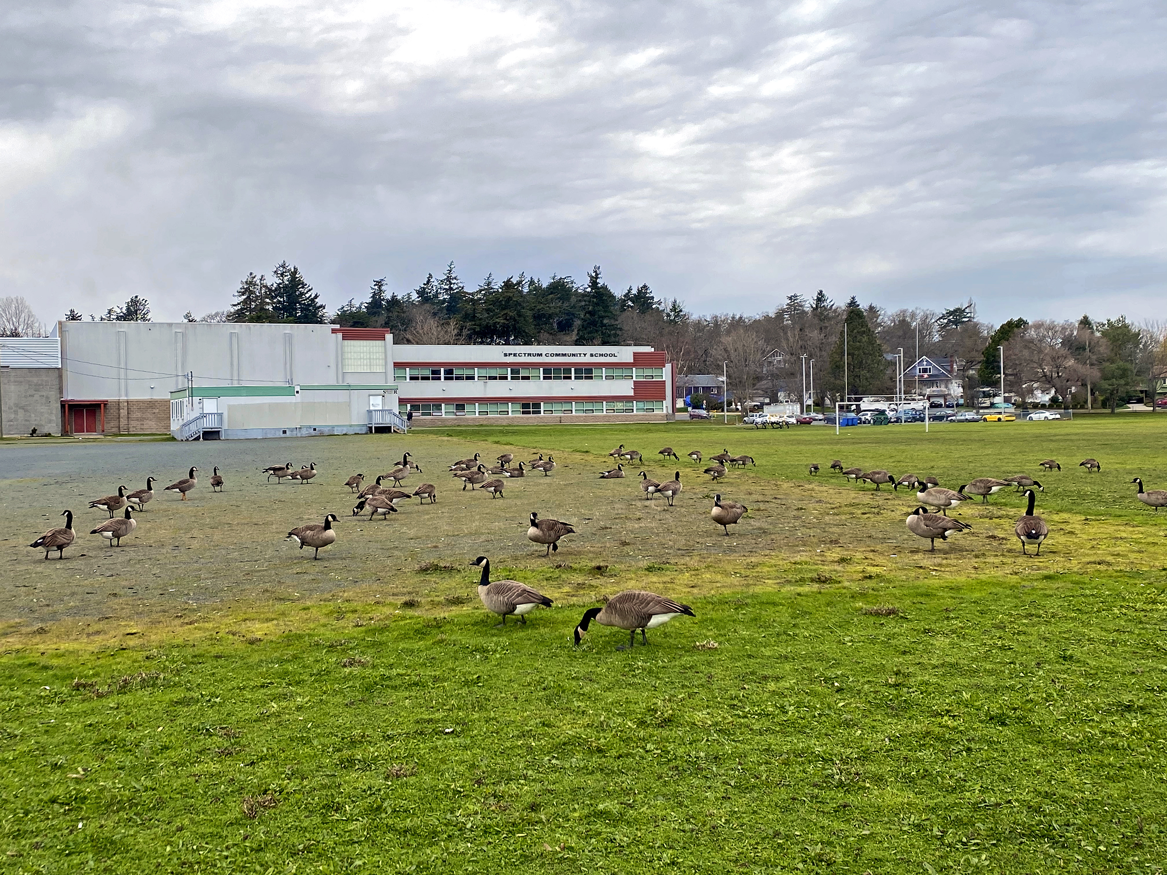 On an average day this is the look throughout the day at Spectrum Community School. The Star Project is hoping to turn this home for transient geese into a community and recreation space. Photo by Carson Papke ISN